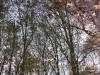 foliage-a-milano02